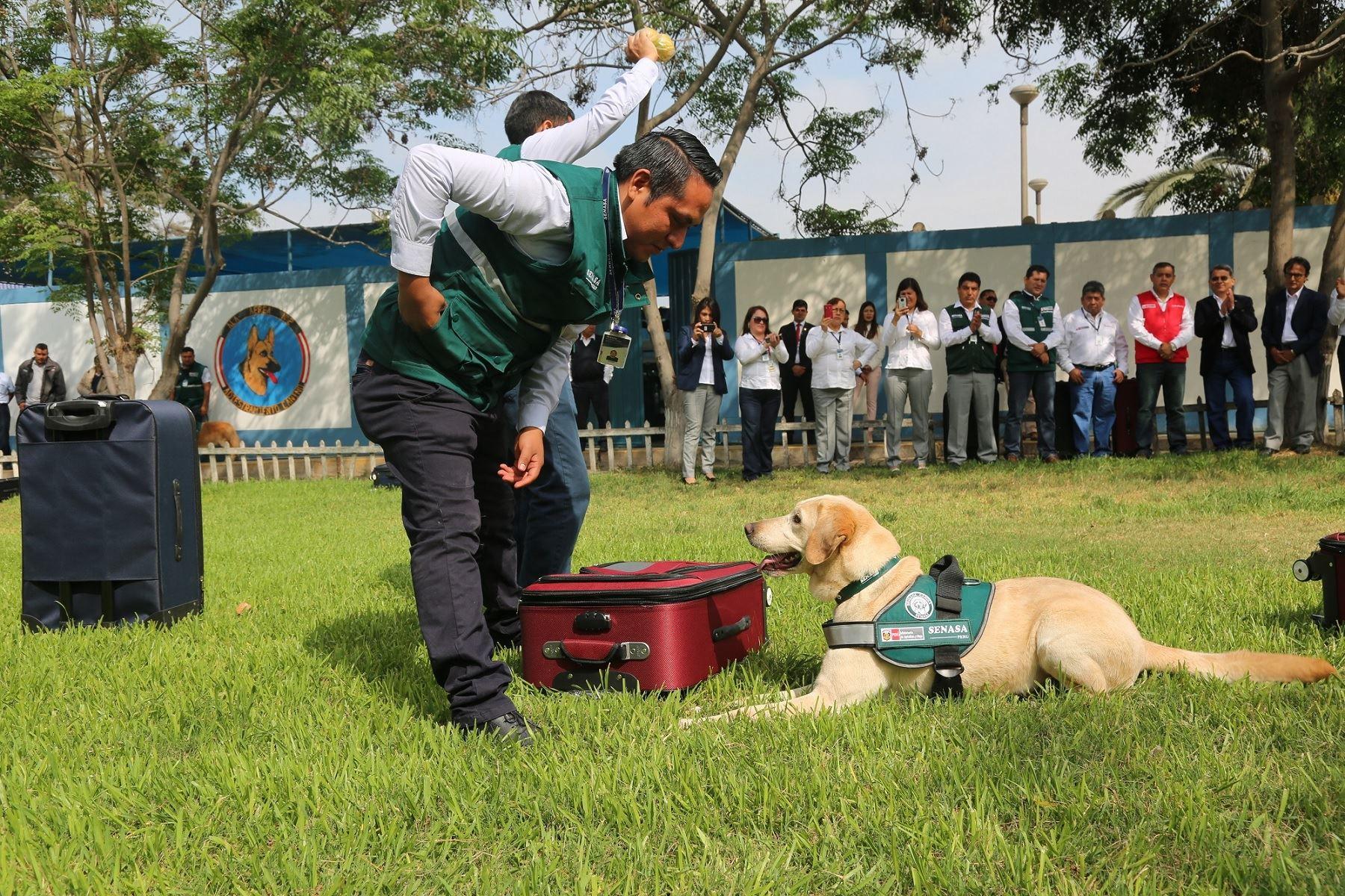 brigada canina